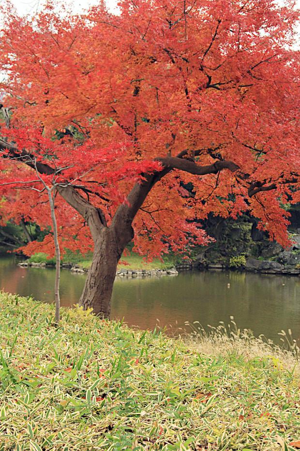 紅葉(こうよう・もみじ)209