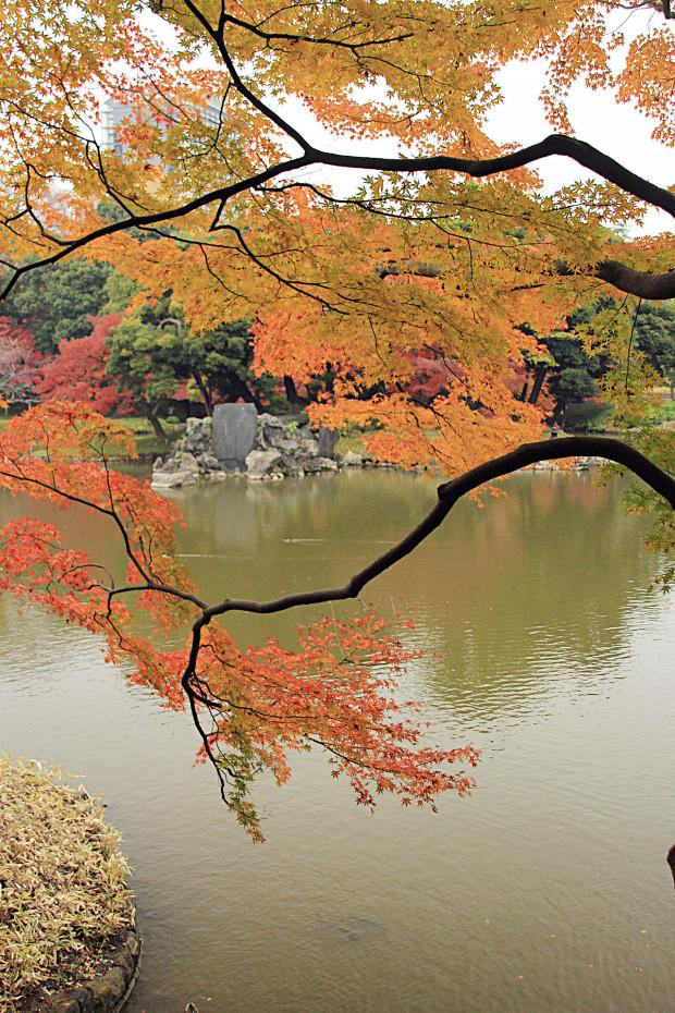 紅葉(こうよう・もみじ)228