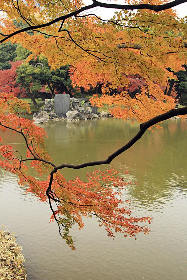 紅葉(こうよう・もみじ)229