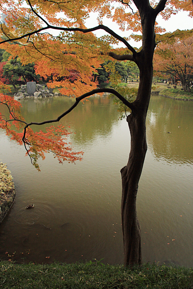 紅葉(こうよう・もみじ)230