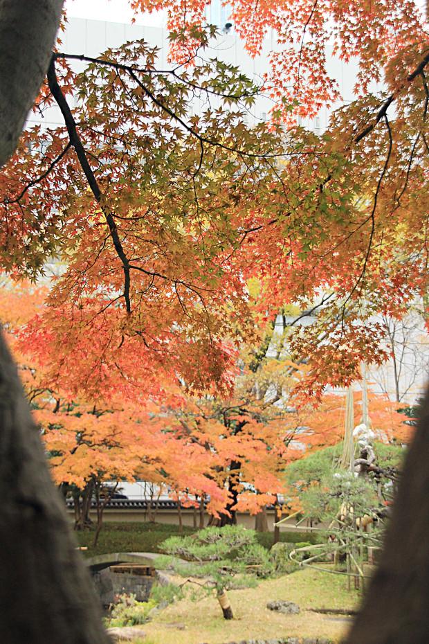 紅葉(こうよう・もみじ)238