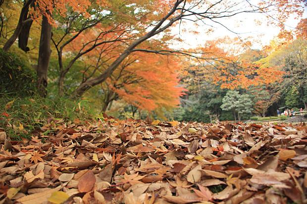 紅葉(こうよう・もみじ)267