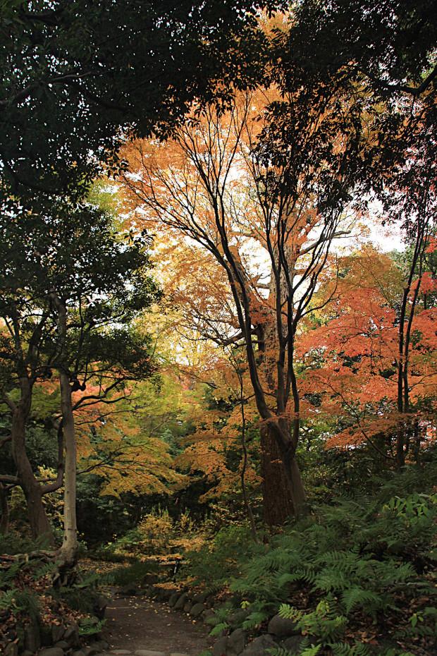 紅葉(こうよう・もみじ)282