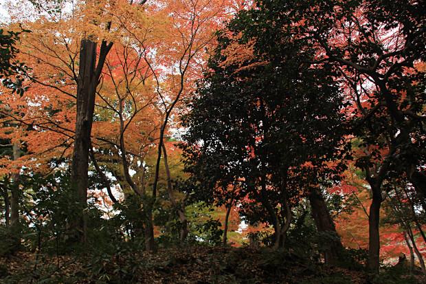 紅葉(こうよう・もみじ)284