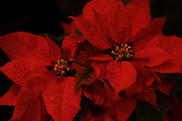 後楽園クリスマス(Xmas)イルミネーション120