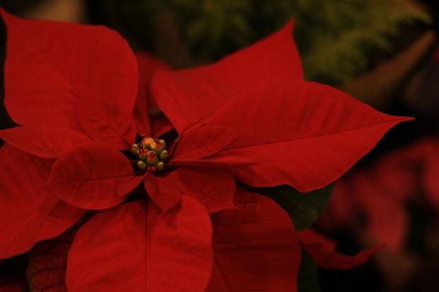 後楽園クリスマス(Xmas)イルミネーション123