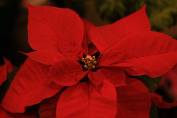 後楽園クリスマス(Xmas)イルミネーション124