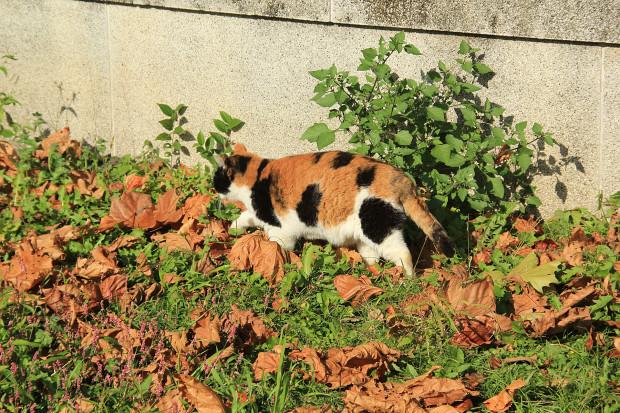 猫|日向ぼっこ写真036