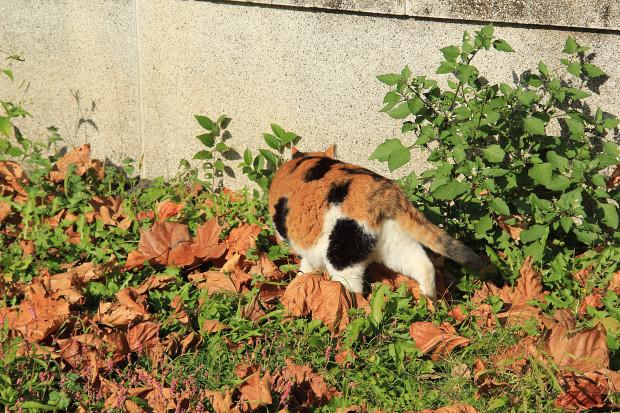 猫|日向ぼっこする三毛猫写真037