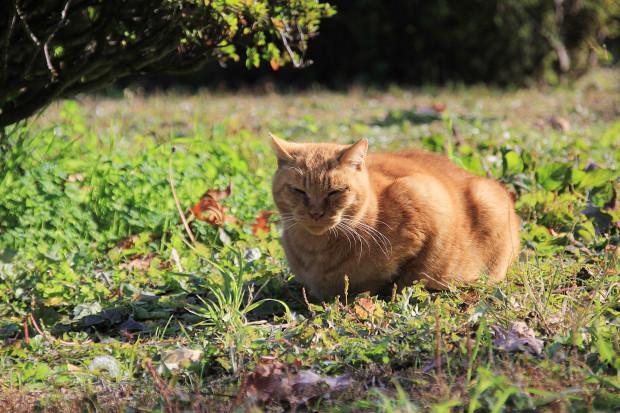 猫|向ぼっこするトラ猫写真064