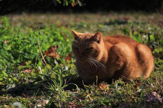 猫|日向ぼっこするトラ猫写真070
