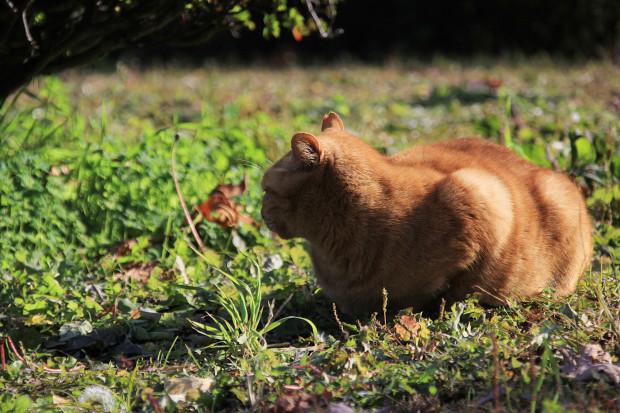 猫|日向ぼっこするトラ猫写真071