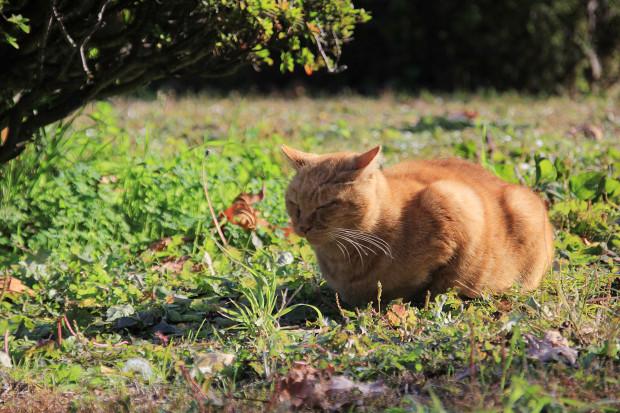 猫|日向ぼっこするトラ猫写真072