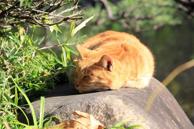 猫|日向ぼっこするトラ猫写真074