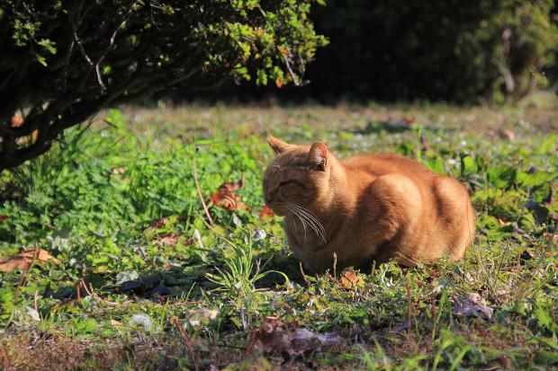 猫|日向ぼっこする茶トラ猫猫写真086