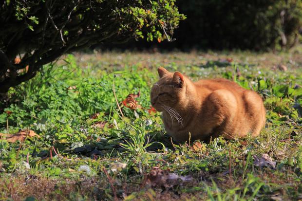 猫|日向ぼっこする茶トラ猫猫写真087