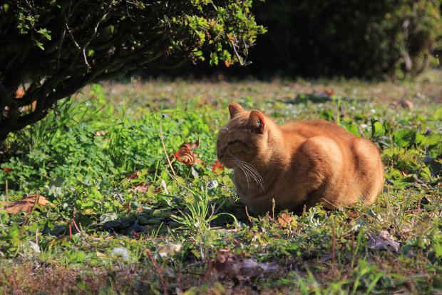 猫|日向ぼっこする茶トラ猫猫写真088