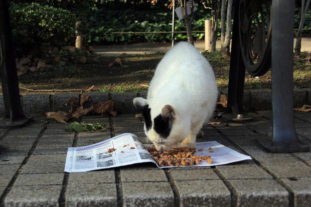 猫|エサを食べる猫写真089