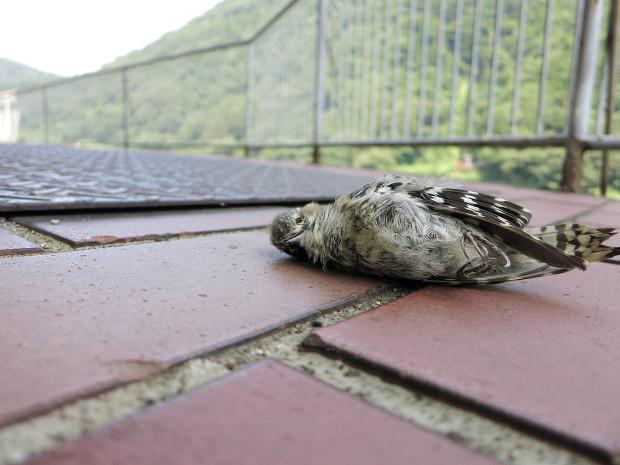 死んだ鳥002