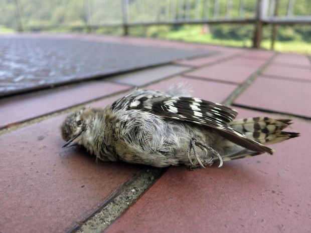 死んだ鳥004