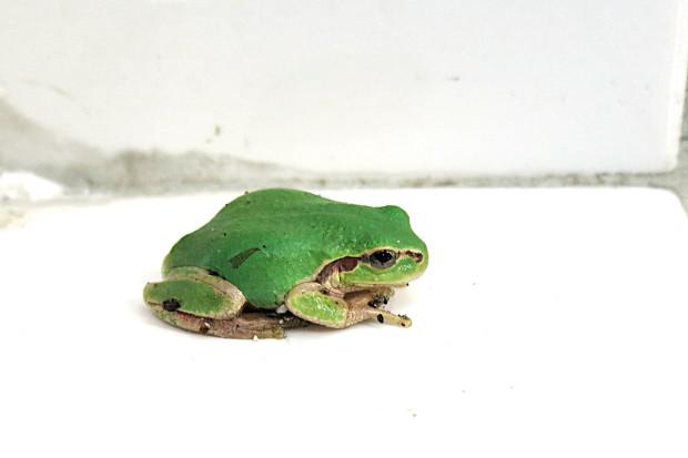 カエル014