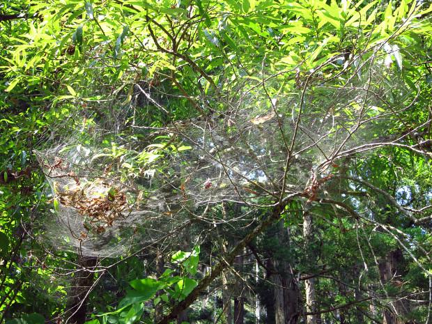 クモの巣002