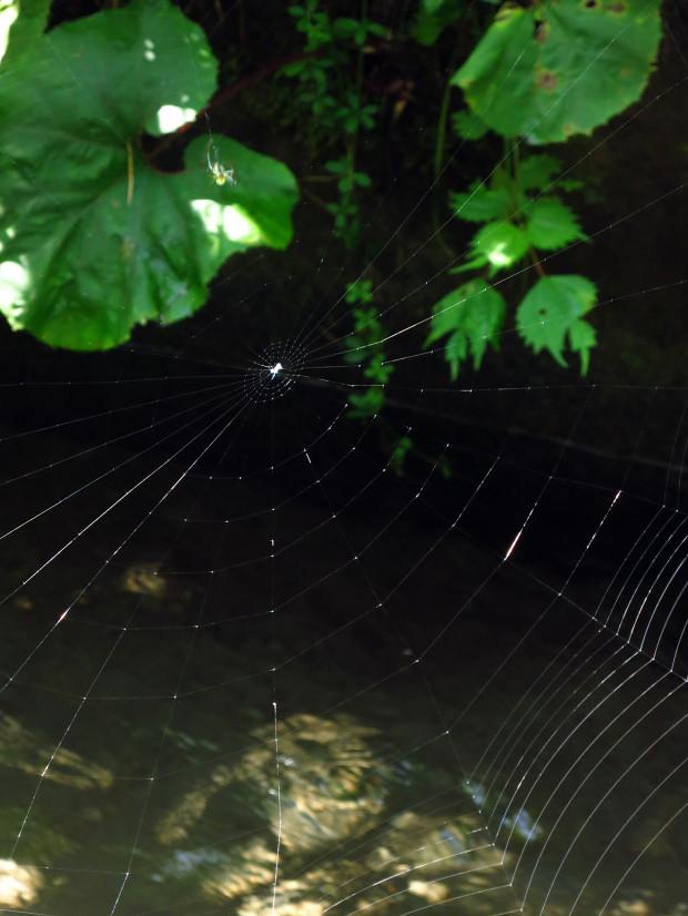 クモの巣003