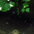 クモの巣サムネイル