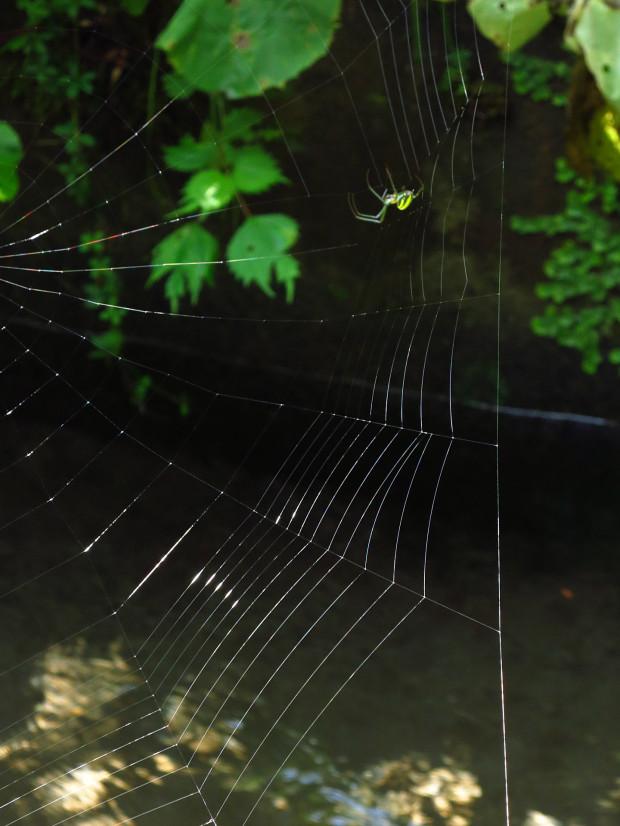 クモの巣004