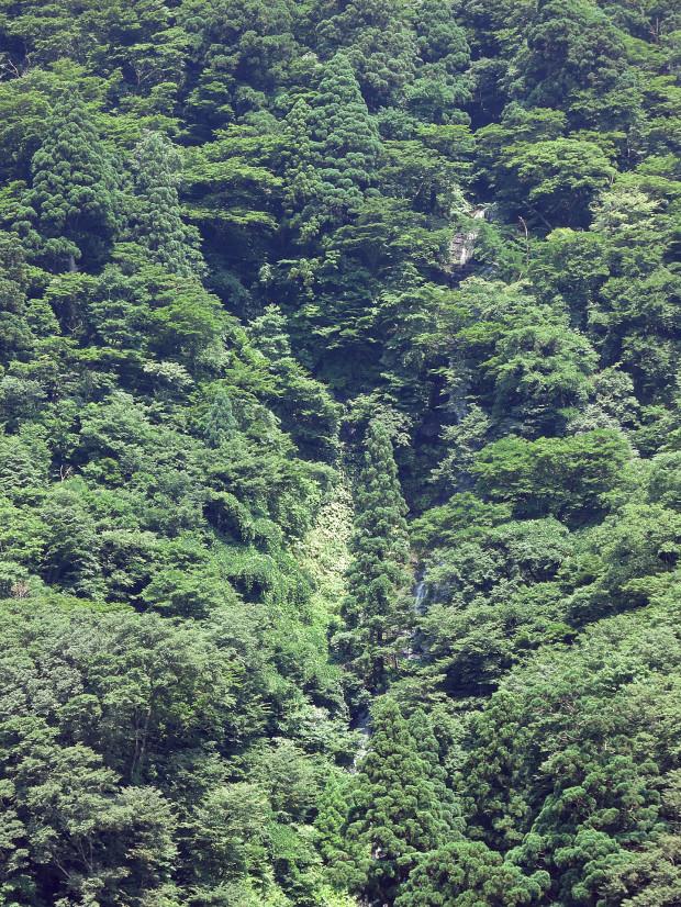 滝、森林(白色の滝)008