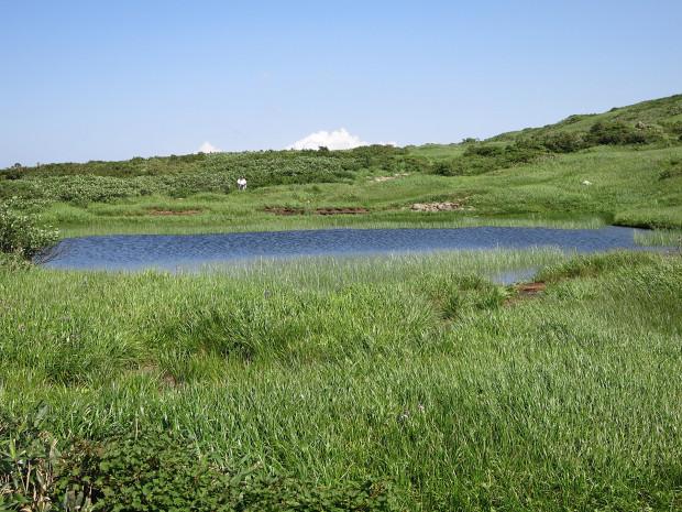 草原|月山八合目、弥陀ヶ原湿原 022