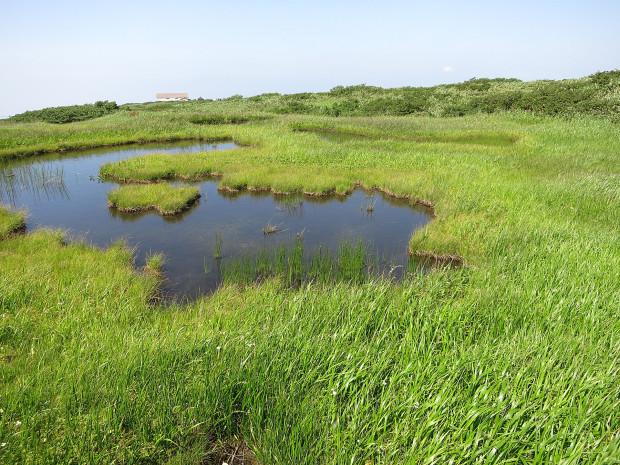 草原|月山八合目、弥陀ヶ原湿原 027
