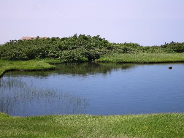 草原|月山八合目、弥陀ヶ原湿原 029