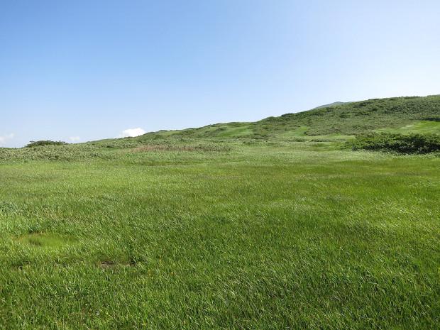 草原|月山八合目、弥陀ヶ原湿原 030