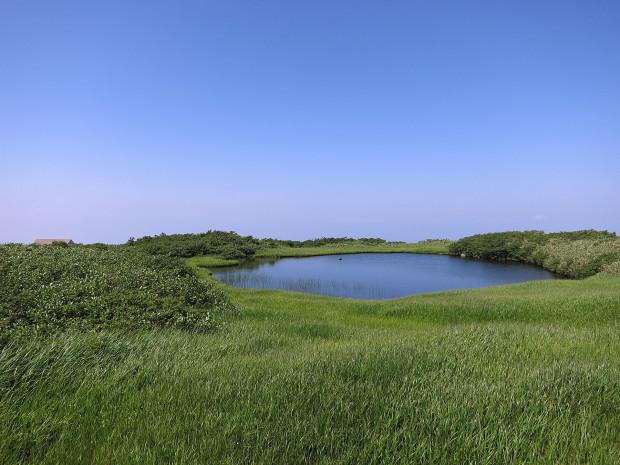 草原|月山八合目、弥陀ヶ原湿原 033