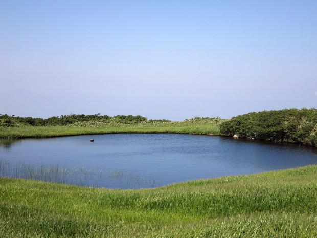 草原|月山八合目、弥陀ヶ原湿原 034