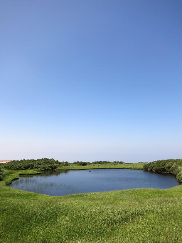 草原|月山八合目、弥陀ヶ原湿原 035