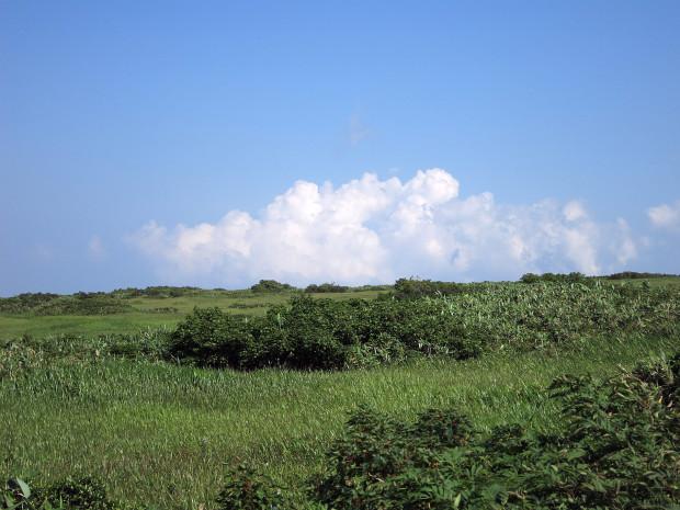 草原|月山八合目、弥陀ヶ原湿原 042