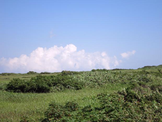 草原|月山八合目、弥陀ヶ原湿原 043
