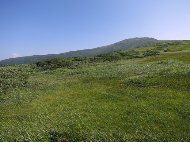 草原|月山八合目、弥陀ヶ原湿原 052