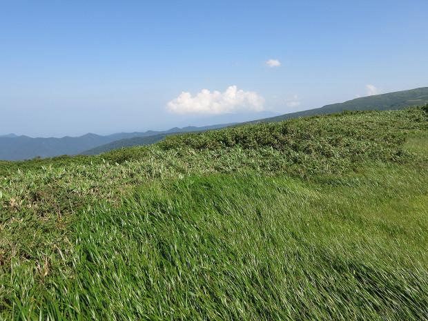 草原|月山八合目、弥陀ヶ原湿原 053