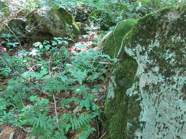 森林|鳥海山獅子ヶ鼻湿原 024