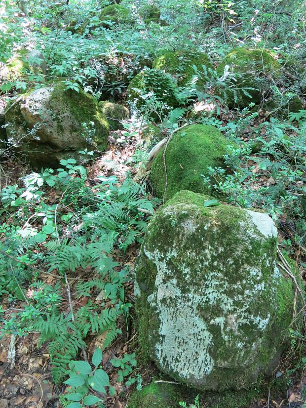 森林|鳥海山獅子ヶ鼻湿原 030