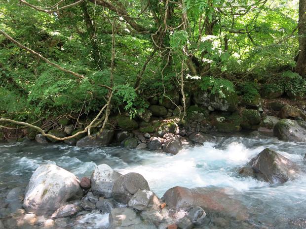 森林|鳥海山獅子ヶ鼻湿原 033