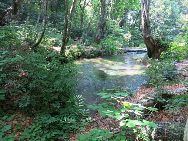 森林|鳥海山獅子ヶ鼻湿原 034