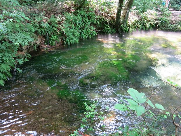 森林|鳥海山獅子ヶ鼻湿原 035