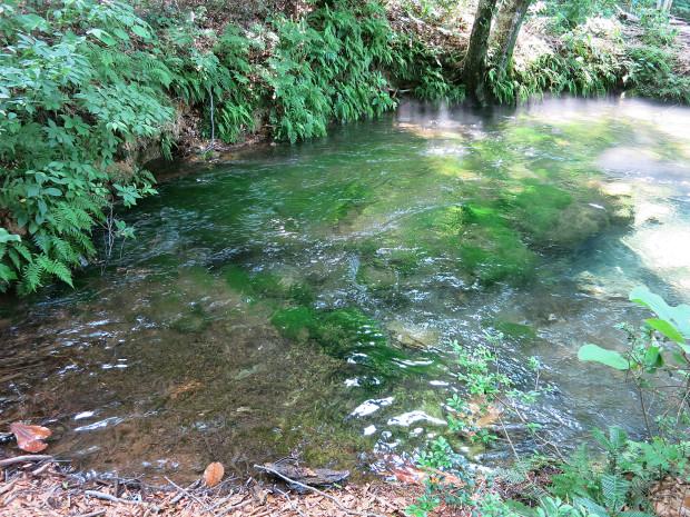 森林|鳥海山獅子ヶ鼻湿原 036