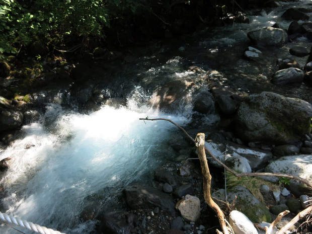 森林|鳥海山獅子ヶ鼻湿原 038