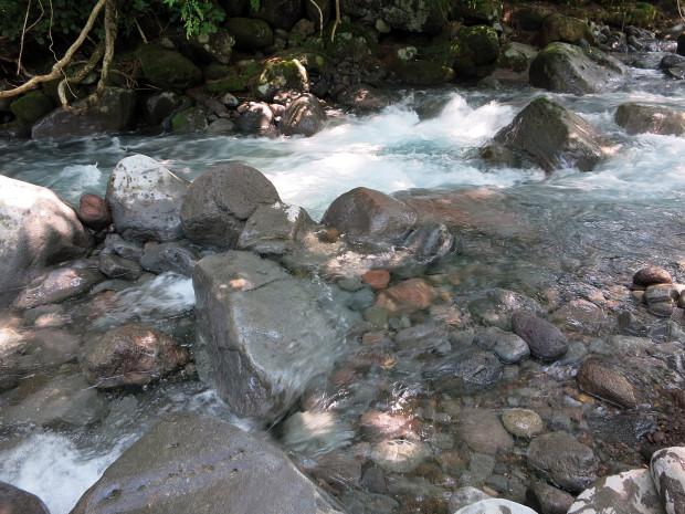 森林|鳥海山獅子ヶ鼻湿原 041