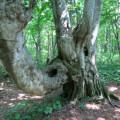 森林|鳥海山獅子ヶ鼻湿原サムネイル